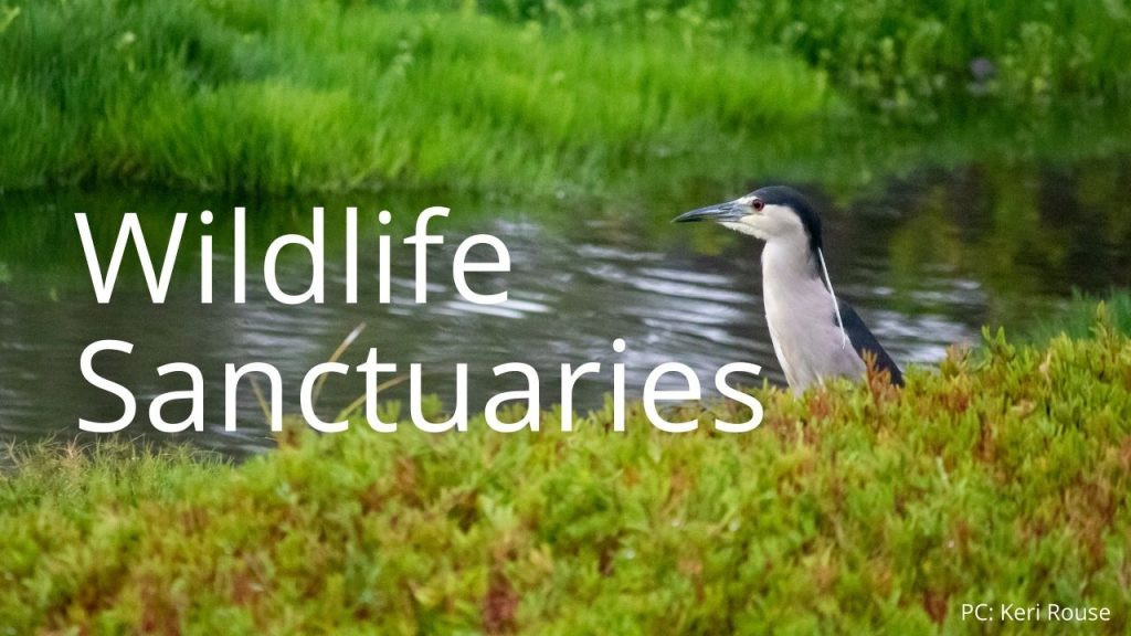An image of an ʻaukuʻu linking to a page on Wildlife Sanctuaries