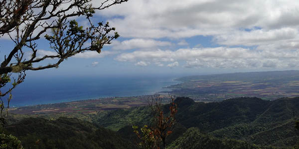 Hiking Safely in Hawai'i Tip: Stay on Trail