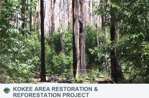 Kokea Area Restoration and Reforestation Project