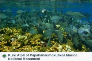 Kure Atoll of Papahānaumokuākea Marine National Monument
