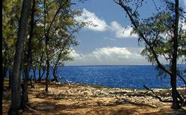 image of a campsite with trees and view of the ocean