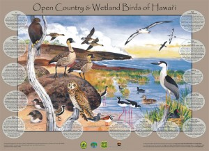 OC-wetland birds poster2