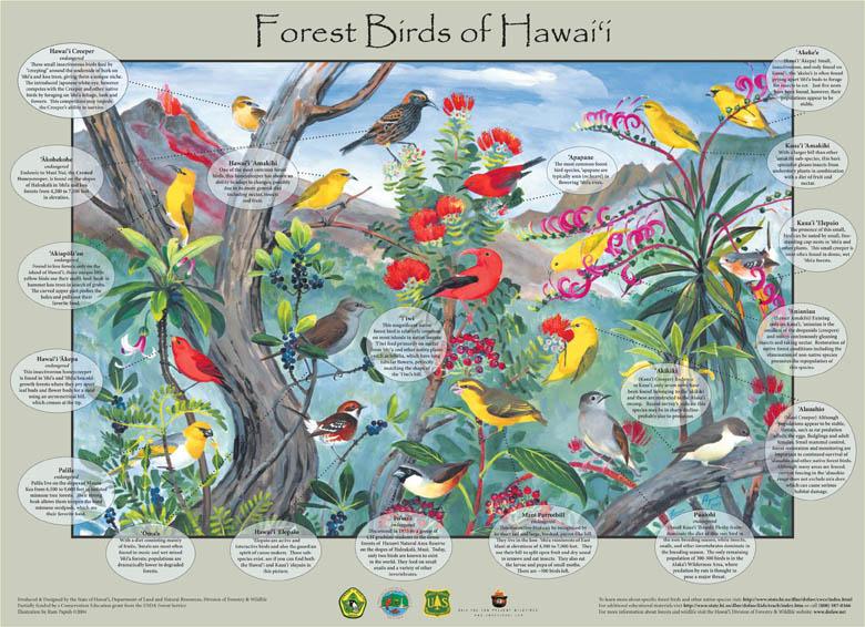 forest bird poster2
