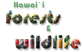 Hawaii Forests & Wildlife