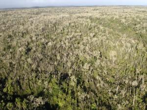Hawaii Island Koa Defoliation