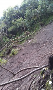 Uprooted trees and debris scattered along hillside