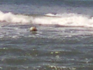 """Caribou III"" - Mooring ball still offshore"