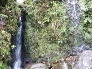 Kaluanui Natural Area Reserve CIP project