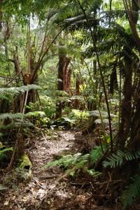 Puu Makaala Forest Trail