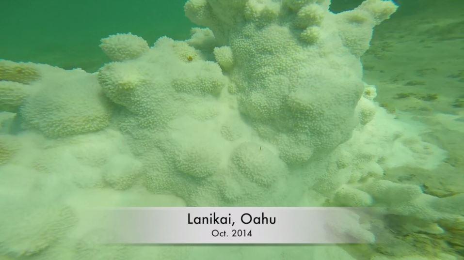 Coral Bleaching Lanikai