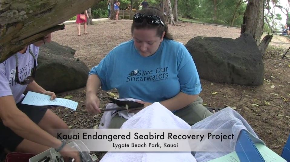 Seabird-Recovery-Project-Video