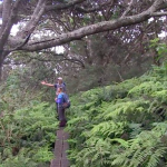 Waikamoi Natural Area Partnership Program (NAPP)