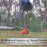 Wildlife and Impact of Forest Fires