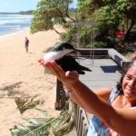 Kauai A'o Release