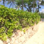 Shoreline Vegetation Update