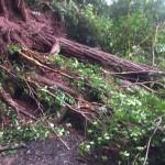 Aiea Loop Landslide - power lines