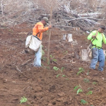 KOKEE Replanting Project
