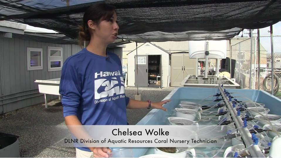 New State Coral Nursery