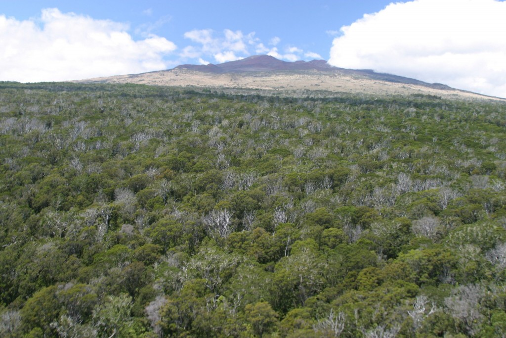 LAUPAHOEHOE Forest