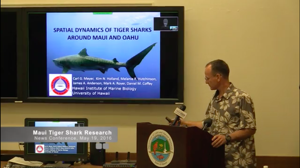 Maui TIger Shark Research