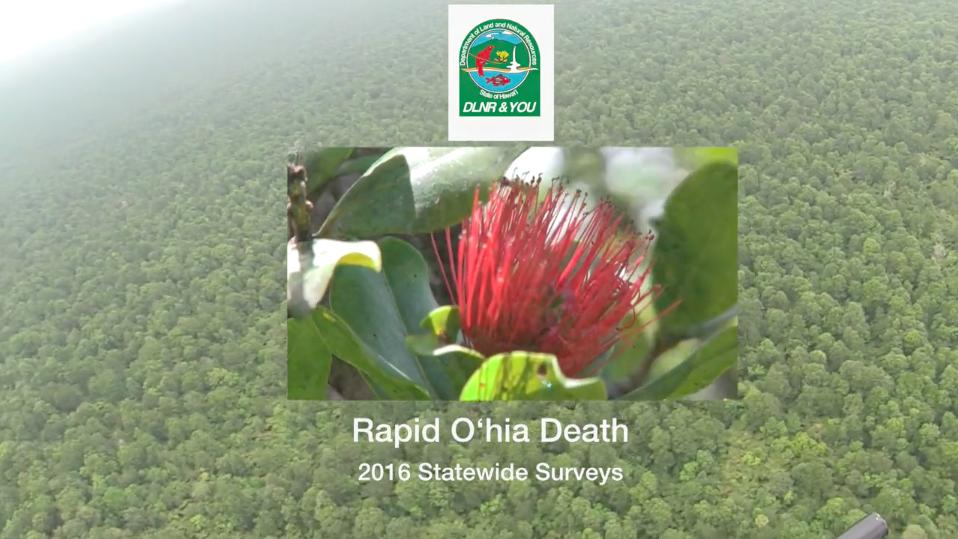 DLNR & YOU - Rapid Ohia Death