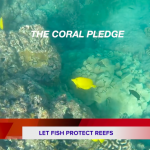 Coral Pledge